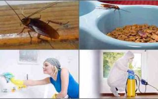 Куда обращаться, если лезут тараканы от соседей?