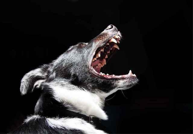 Лает собака у соседей – что делать, если ночью в квартире постоянно громко воет пес, как избавиться от животного и куда жаловаться, если оно мешает спать?