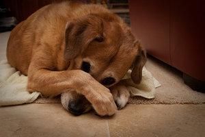 Что делать, если от соседей воняет: куда обращаться, если стоит неприятный запах от кошек или собак, как жаловаться на вонь от кур или свиней?