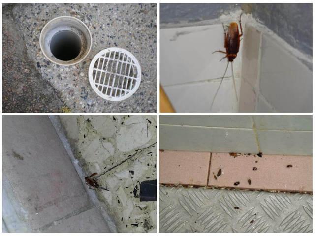 От соседей ползут тараканы: что делать, если лезут насекомые, куда жаловаться и нужно ли обращаться в СЭС, чем отпугнуть приходящих после травли паразитов?